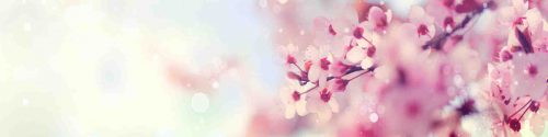 Fototapet_AdobeStock_133683108