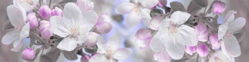 Fototapet_AdobeStock_195893337(1)