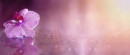 stock-photo-beautiful-pink-orchid-flower-banner-with-copy-space-398885089