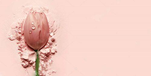 stock-photo-beautiful-pink-tulip-lying-on-a-pink-powder-postcard-cosmetics-nature-macro-beauty-naturalness-1307091271