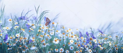 stock-photo-beautiful-wild-flowers-chamomile-purple-wild-peas-butterfly-in-morning-haze-in-nature-close-up-1428297209