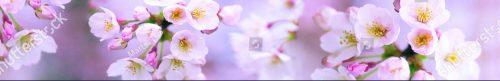 stock-photo-cherry-petals-130312067