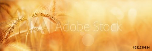 AdobeStock_281230384_Preview