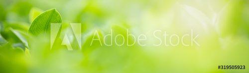 AdobeStock_319505923_Preview