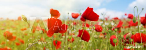 AdobeStock_340816947_Preview
